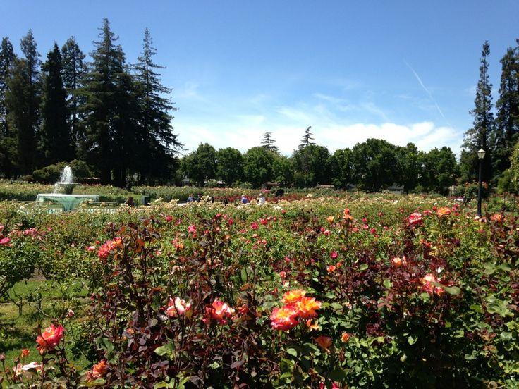 49 Best Historic San Jose Images On Pinterest