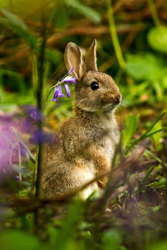 """afairyheart: """" Rabbit in the bluebells by Dulcie Fairweather """""""