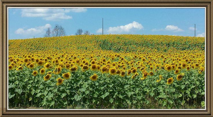 https://flic.kr/p/o8PWt6   Dream of Tuscany                           ph Amos Locati   summer 2014