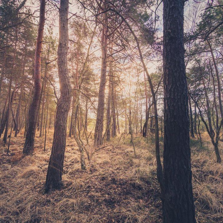 Bild 23 - Zadlitzbruch in der Dübener Heide bei Torgau | © Michael Eichhorn #zadlitzbruch #dübener_heide #naturschutzgebiet #sachsen #saxony #ausflugsziel #torf #moor #hochmoor #wandern #dübenerheide #duebenerheide #torgau #baddueben #baddüben #wald #sumpf #sumpfgebiet #natur #naturschutz #reservat #biosphäre #biosphere #farn #naturpark #falkenberg #trossin #dresden #nordsachsen #leipzig #sehenswürdigkeit #ziel #sonnentau #sumpfdotterblume #kranich