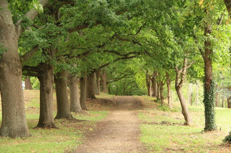 Park in Gisborne Victoria