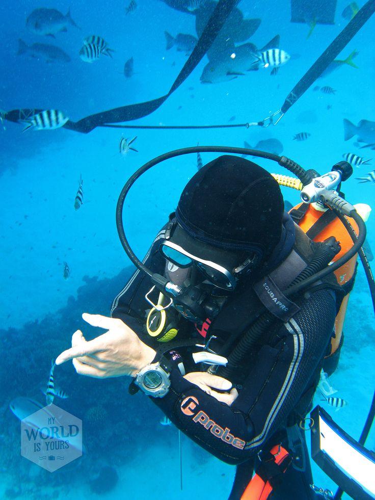 Op de bodem volgen we Yuta door het werelderfgoed en we flitsen wat af met onze gehuurde digitale onderwatercamera.