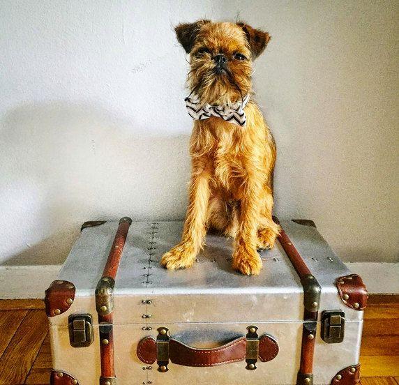 Chevron Bow Tie Dog Collar - Grayscale Chevron Bow Tie Dog Collar - Black White Chevron Bow Tie Collar for Dogs - Dog Wedding Attire