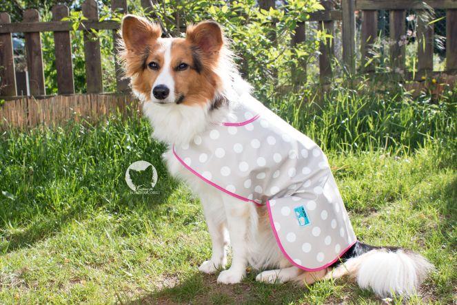 7 besten Hundemantel nähen Bilder auf Pinterest | Haustiere, Hunde ...