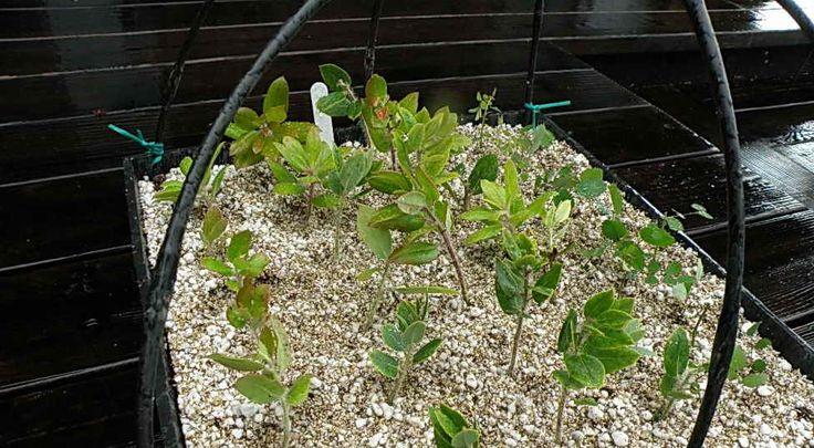 Для чего нужен вермикулит, его применение в садоводстве | Дача - впрок