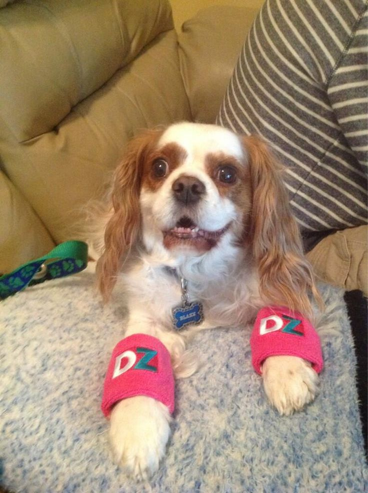 Arm Bands For Dog Showing Dogs