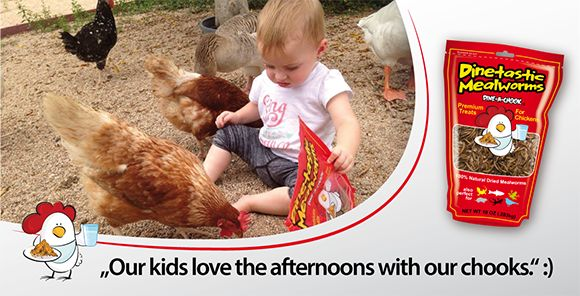 dried-mealworms-kids-having-fun-with-chooks.png#chickens feeders #hens #eggs #feeders #homesteading #farmers #drinkers #Townsville #shop #Mealworms #chickens  #PoultryFarming