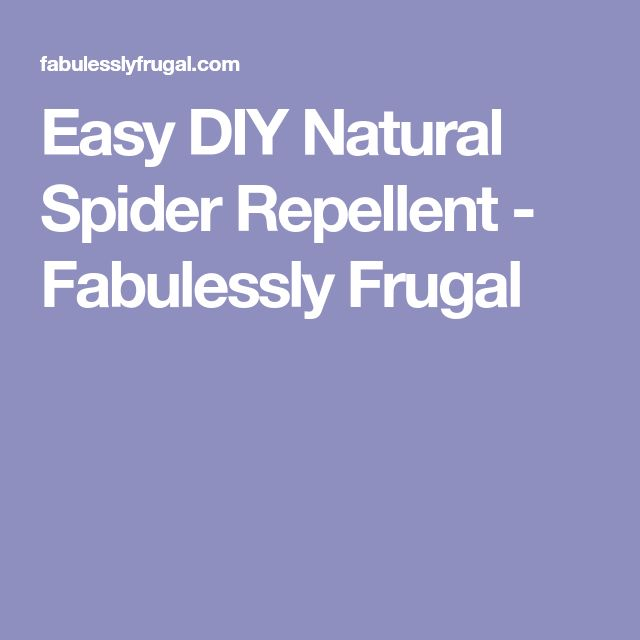 Easy DIY Natural Spider Repellent - Fabulessly Frugal