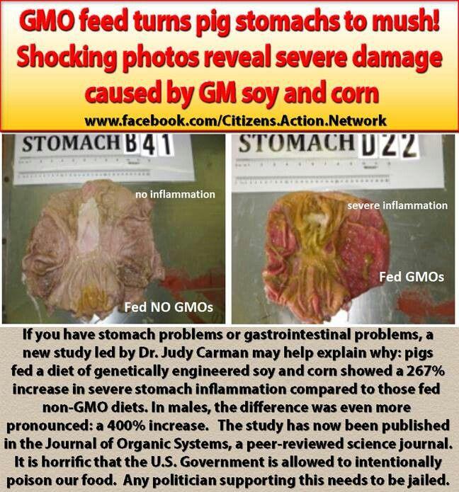 #GMO not so healthy food
