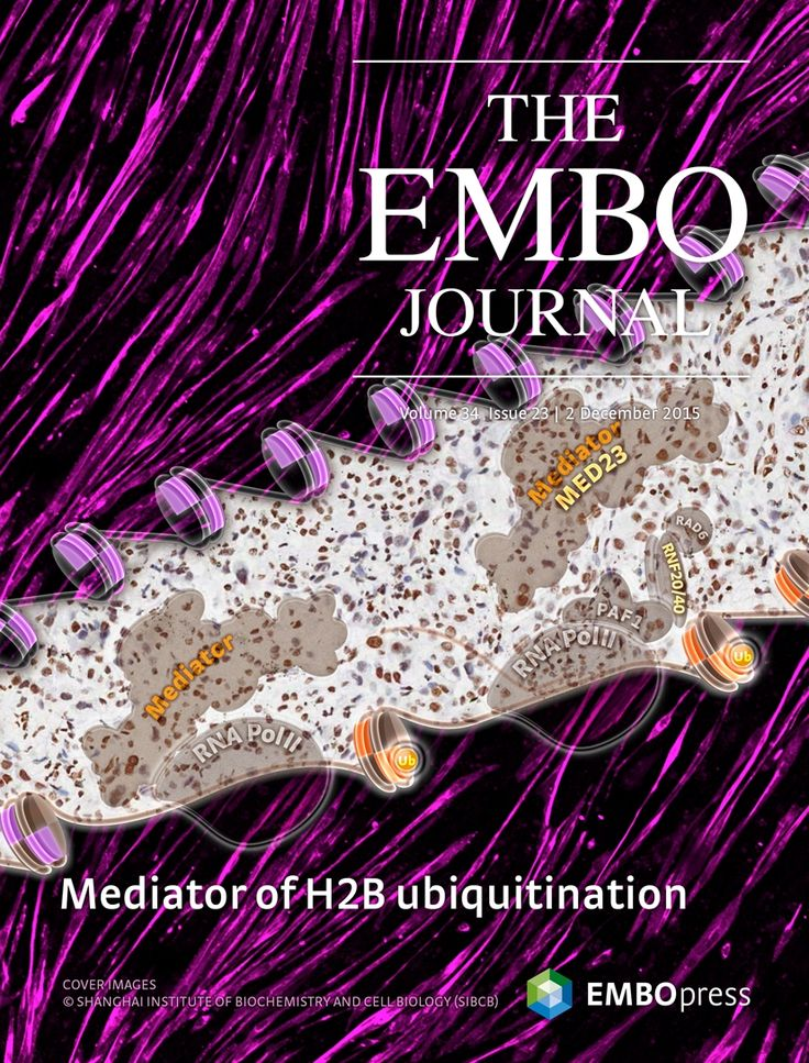 About the Cover — December 02, 2015, 34 (23) | The EMBO Journal