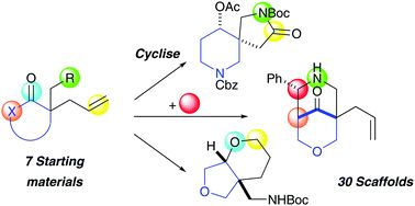 Modular synthesis of thirty lead-like scaffolds suitable for CNS drug discovery