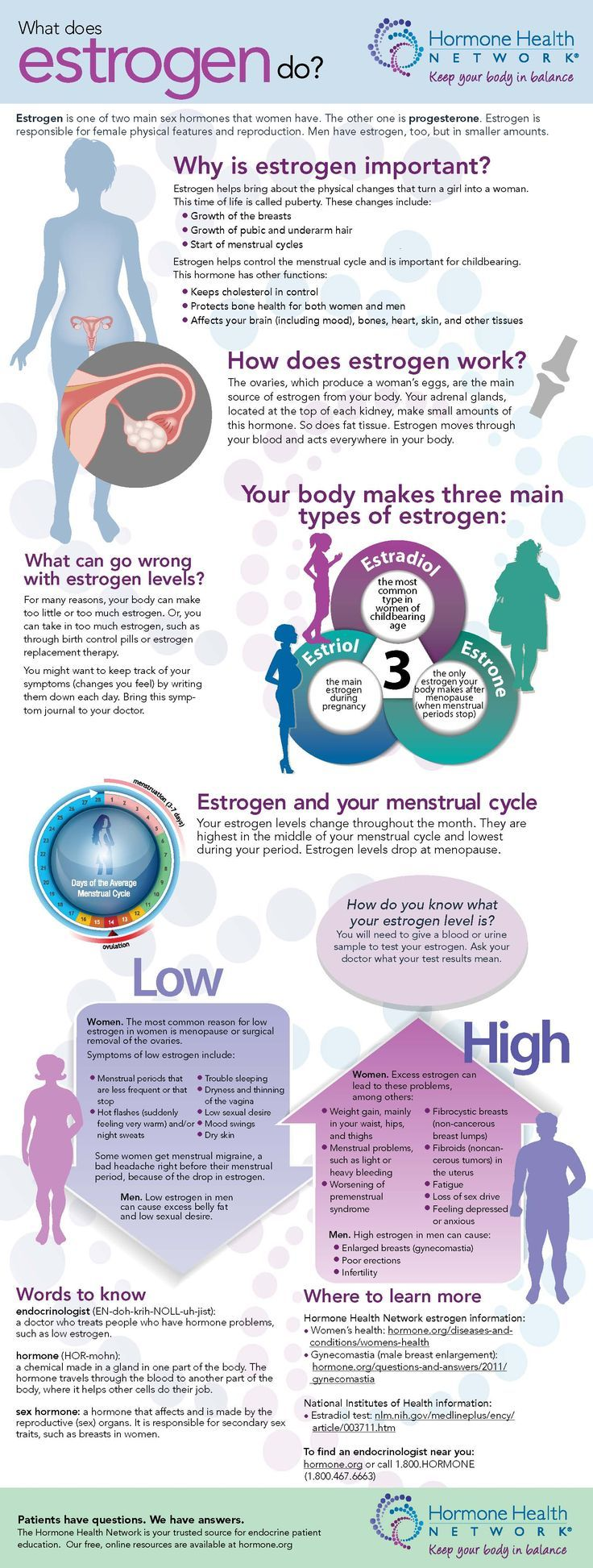 what does estrogen do?