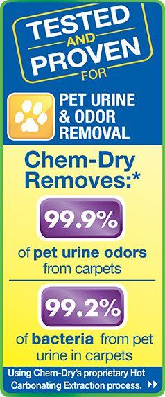 Pet Urine Removal Services | Dog & Cat Odor Removal | Chem-Dry