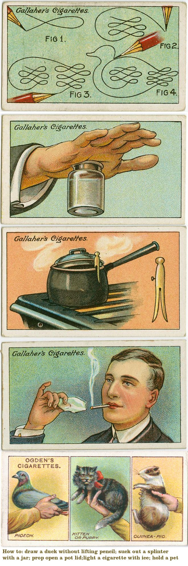 """cigarette cards ~ Gallaher's """"How to""""...via Karen Paul.  I've often wondered how one was to hold a pigeon or a guinea pig...."""