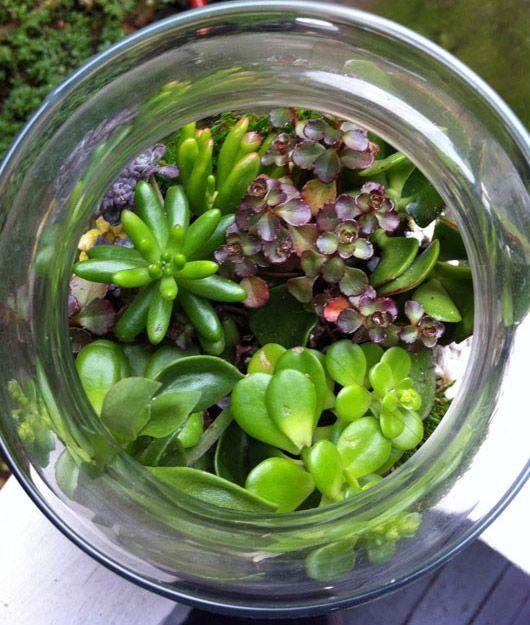 terrarium: Diy Ideas, Succulents Plants, Little Gardens, Green Terrarium, Example Terrarium, Terrarium Minis Gardens, Succulent Terrarium, Gardens Outdoor, Terrarium Ideas