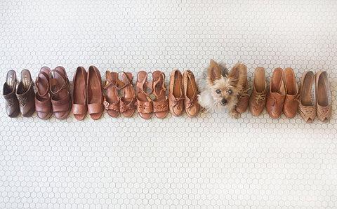 dog in shoes ffffound   This is tooooo cute!