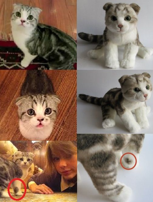 this is taylorswift13 cat meredithkitty and her cuddle clone cuddle clones are 100 custom. Black Bedroom Furniture Sets. Home Design Ideas