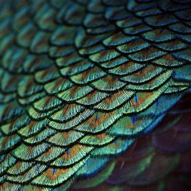 Iridescent, photo by porfidax, flickr