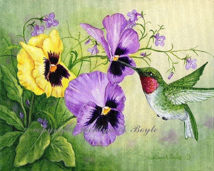 Giclee Hummingbird Print Ruby Throated Hummingbird