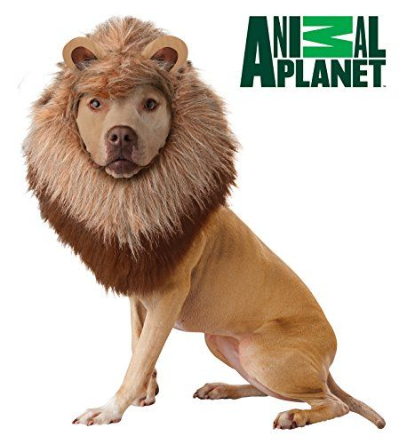 California Costume Collections Animal Planet Lion Dog Costume, Small - http://www.thepuppy.org/california-costume-collections-animal-planet-lion-dog-costume-small/