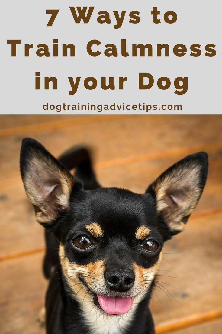 Calm Answered Command For Dog Training Book Your Next Appointment