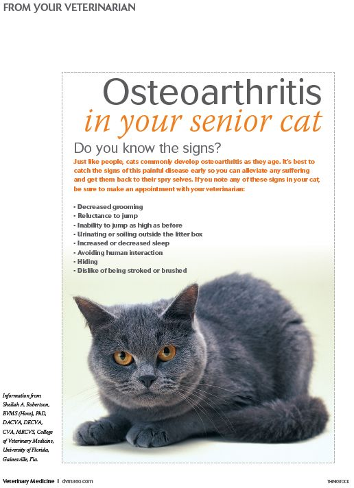Osteoarthritis in your senior cat: Do you know the signs? - #Veterinary client handout - dvm360