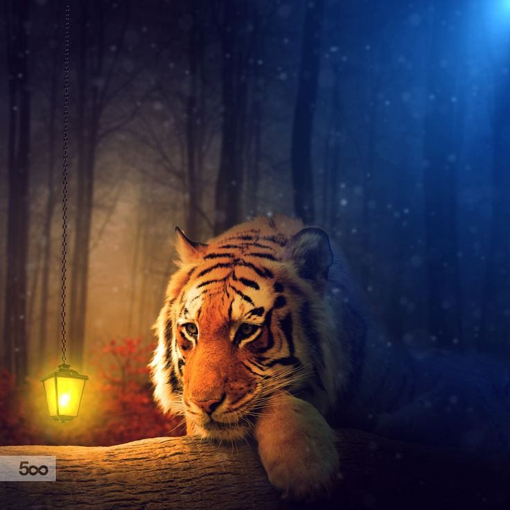 Tiger Fantasy by Lapanlima on 500px