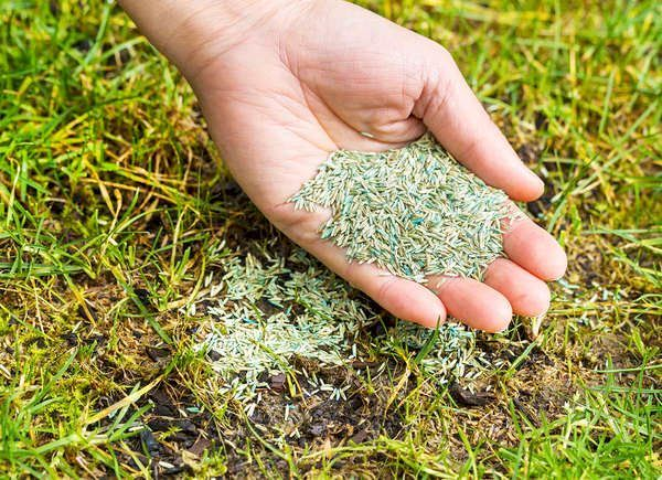 10 Ways To Make Your Fall Lawn Care Easier According To The Pros Planting Grass Growing Grass Overseeding Lawn