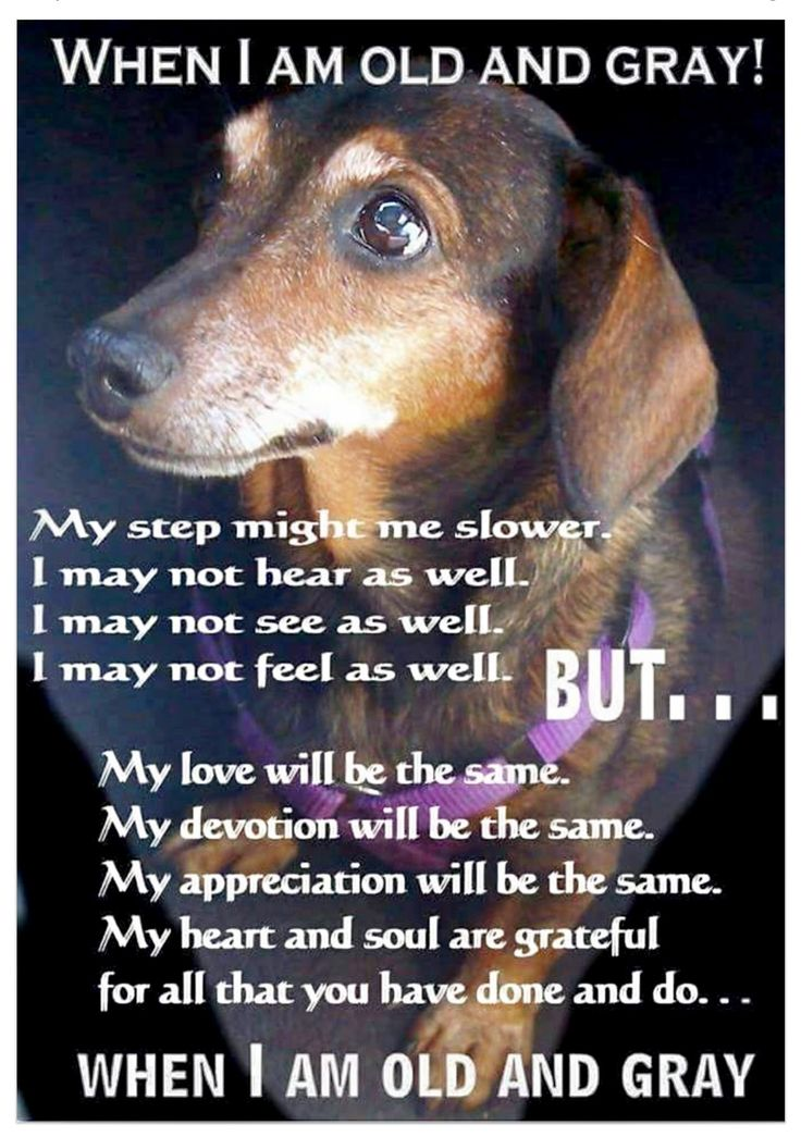 Lisa Thode for MidWest Dachshund Rescue on Facebook