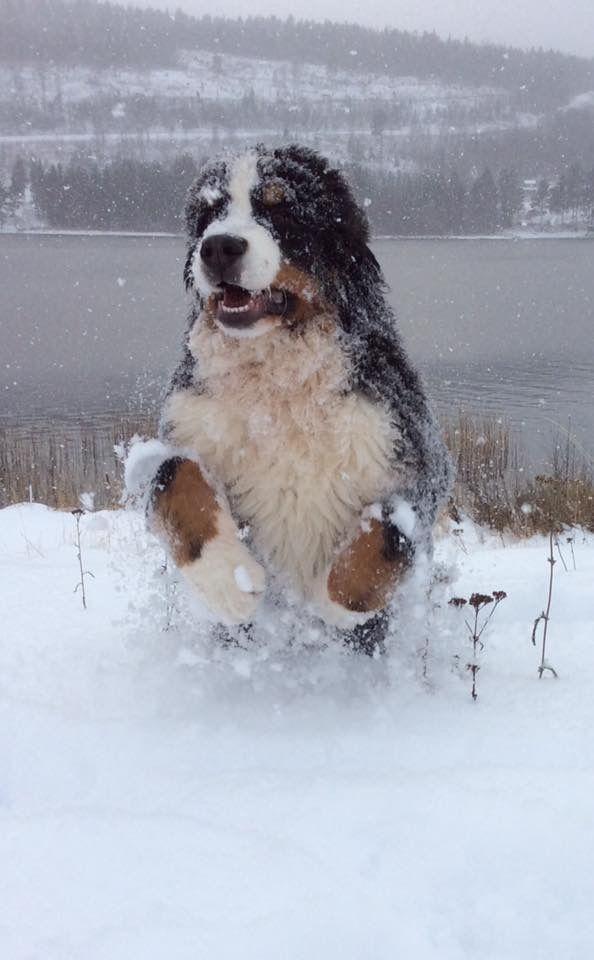 Bounding through the snow!