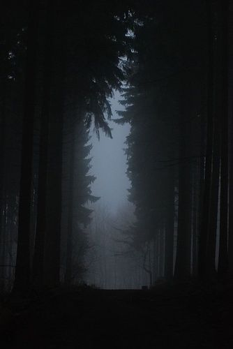 ★ INTO THE WOODS (On A Dark Trail by Alexander Boden)                                                                                                                                                                                 More
