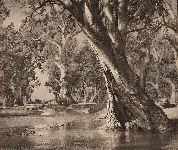 A billabong, (1935) by Harold Cazneaux :: The Collection :: Art Gallery NSW