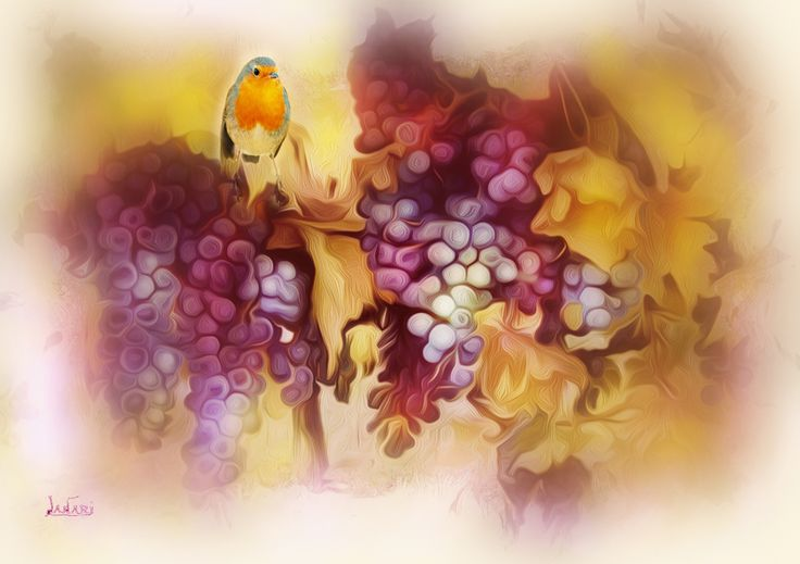 Robin on grapes