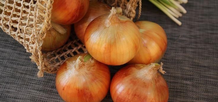 Zwiebeln richtig ernten und lagern – Tipps für Hobbygärtner (Foto: CC0/ pixabay/ rotozld)