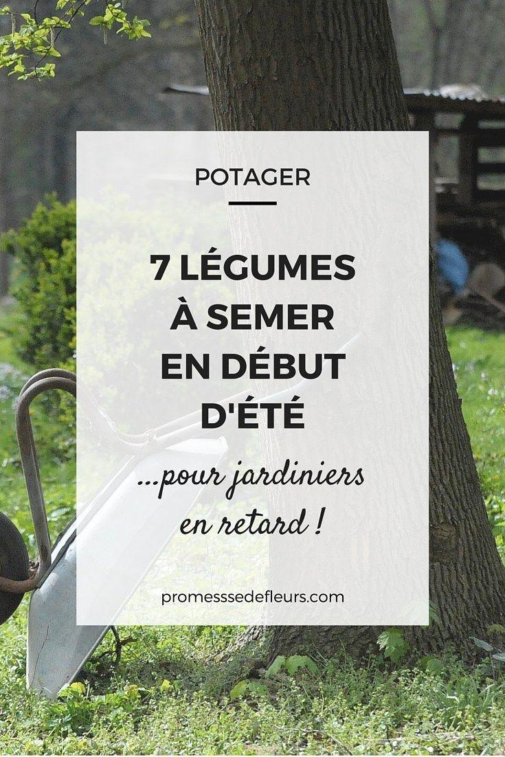 Potager : 7 légumes faciles, à semer en début d'été