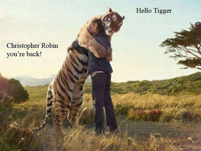 !!!: Big Cat, Big Hug, Tigers Hug, Bears Hug, Pet, Bighug, Calvin And Hobbes, Bigcat, Animal