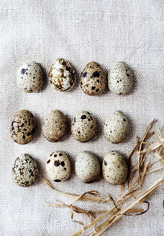 ≗ Feathered Nest of Hope ≗ bird feather & nest art jewelry & decor - Eggs | ©Kara Rosenlund