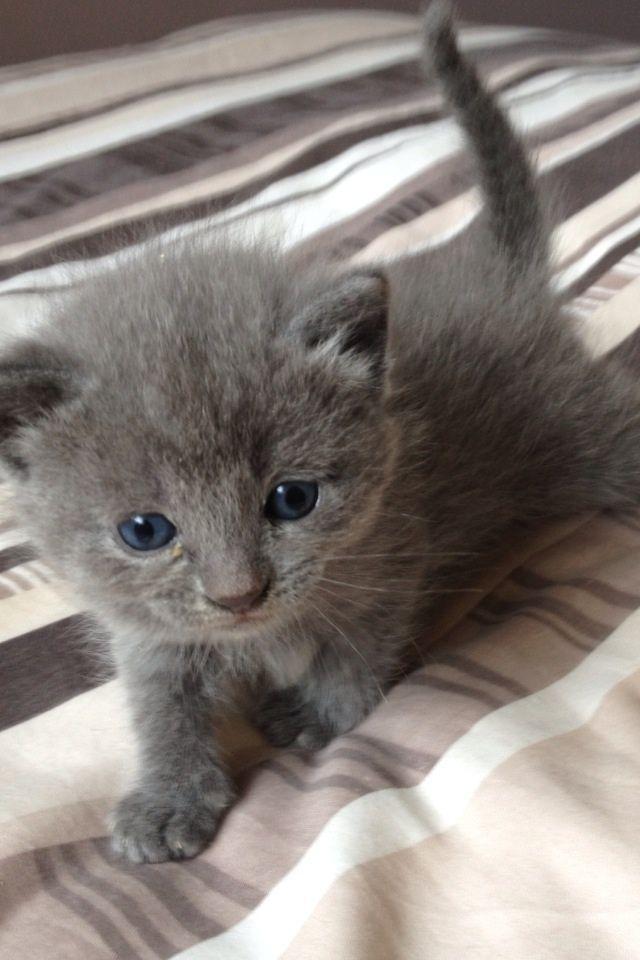Best 25+ Ragdoll kitte...