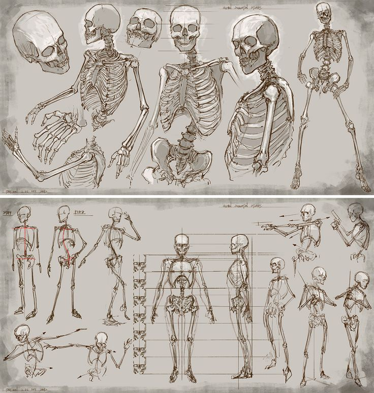 A collection of anatomy and pose references for artists.