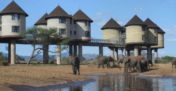 Elephants near Sarova Salt Lick Lodge where we stayed