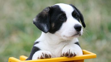 Image for When Do Puppies Lose Their Baby Teeth Article