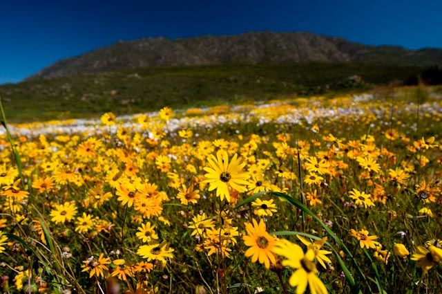 7 of the Best Places to See Spring Flowers in South Africa