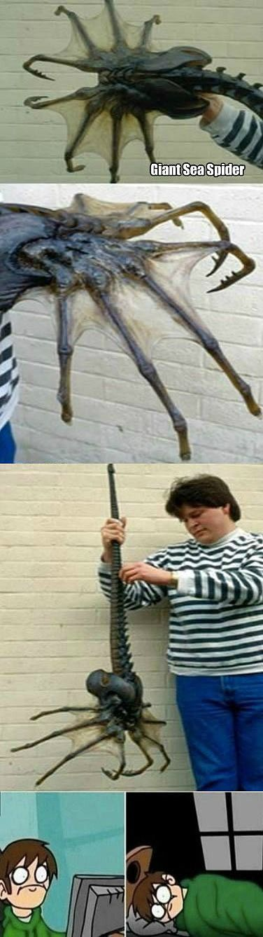 You Can't Unsee a Giant Sea Spider | Mega Memes LOL!