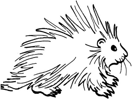 Porcupine 3 Coloring Page From Porcupines Category Select 27260 Printable Crafts Of Cartoons Nature Animals Bible And Many More