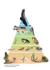 Las pirámides pueden informar de diferentes valores del ecosistema:      De la cantidad de biomasa o materia orgánica que hay en  cada nivel trófico.      Del números de individuos de cada nivel trófico.      De la energía que se almacena en cada nivel trófico