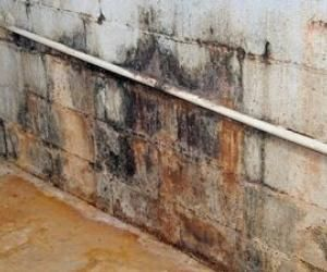 Remove Mold Stains