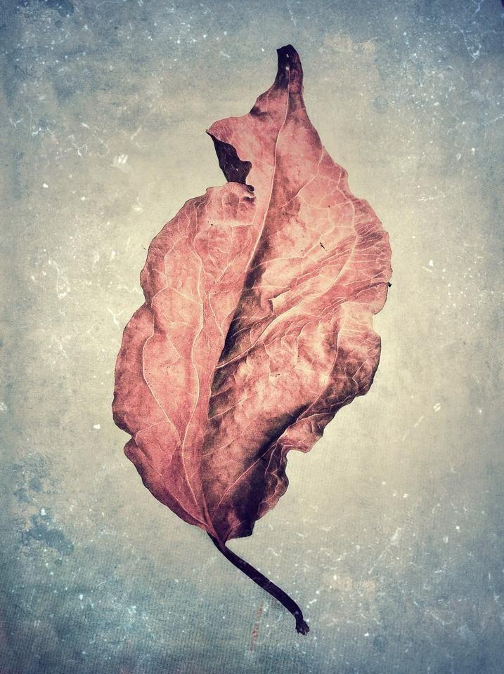 Leaf, iPhone, art