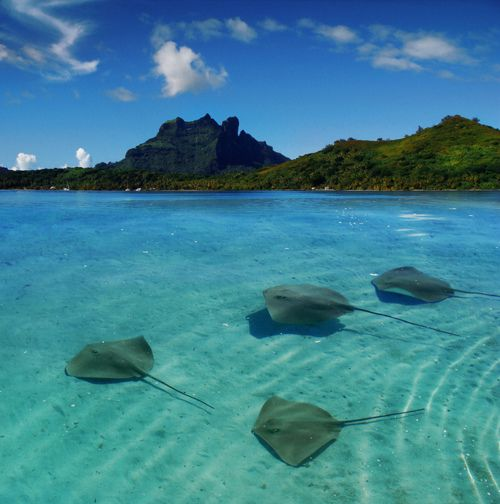 sting raysDreams Places, Grand Cayman, Travel Photos, Cayman Islands, French Polynesia, Best Quality, Sting Ray, Vacations Travel, Leadership Development