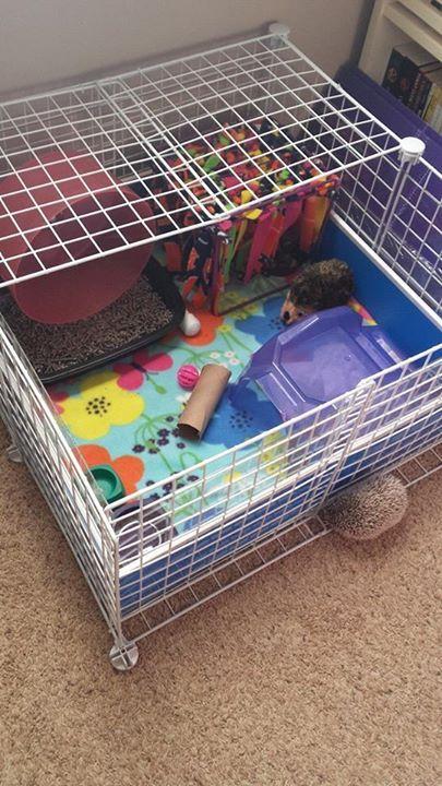 Pygmy Hedgehog Toy Ideas | Wow Blog