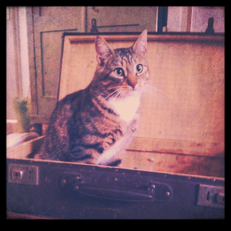 Tigger in a vintage trunk